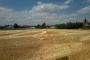 Un champs avec des bottes de paille rectangulaires